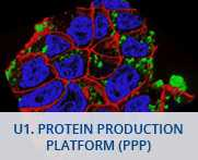 U1-Protein Production Platform - PPP