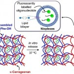 Nanbiosis_U10_Cationic nioplexes in supramolecular hydrogels as hybrid materials to deliver nucleic acids