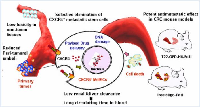 A New Pathway For The Prevention Of Metastasis In Colorectal Cancer In Humans Is Open A Nanomedicine That Selectively Eliminates Metastatic Stem Cells Nanbiosis
